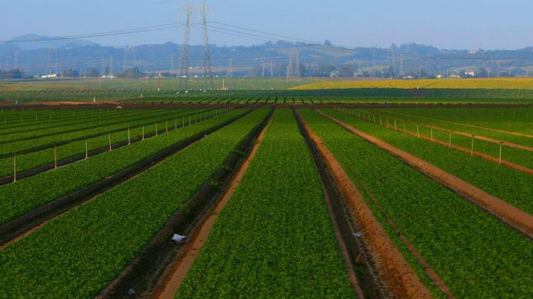 What are the various advantages of Agriculture