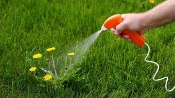 best fast acting weed killer